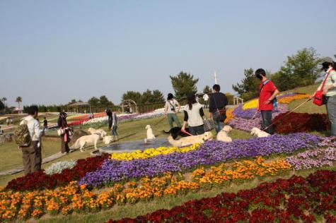 2009.4.19 淡路島 234f
