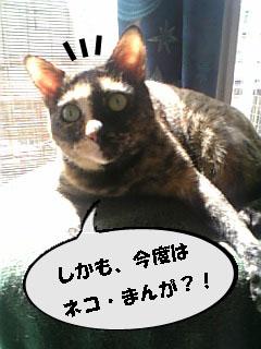 小春・ご挨拶2