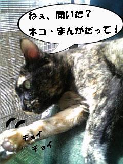 小春・ご挨拶3