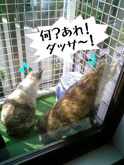 nekozukin-sannyan2