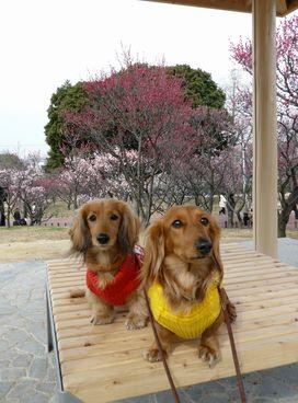梅と水仙1