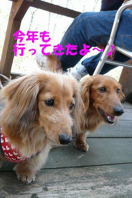 清荒神2009(1)