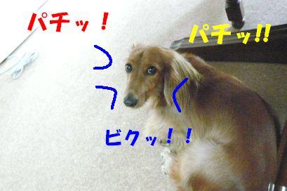 ナイス蚊っち(1)