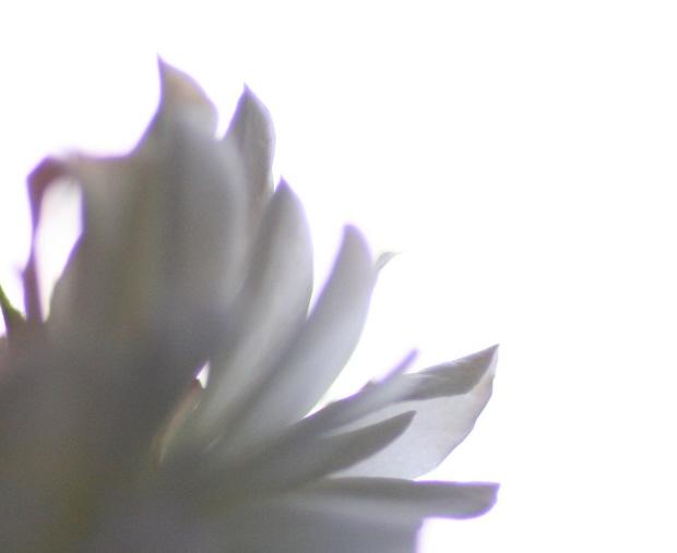 00013932-2.jpg