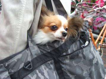 リルちゃんinバッグ