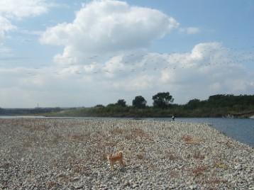 河原と小麦ちゃん