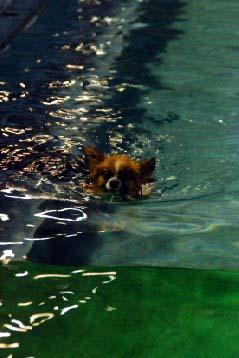 泳ぐviviちゃん
