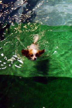 泳ぐエミュ