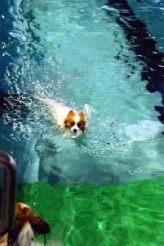 泳ぐレナちぃ
