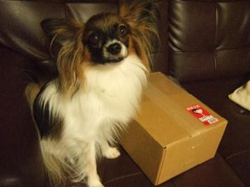 箱が届いたです