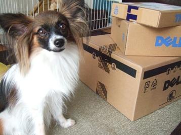 また箱が届いたです