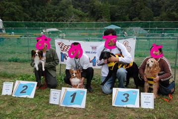 犬種別トップ3