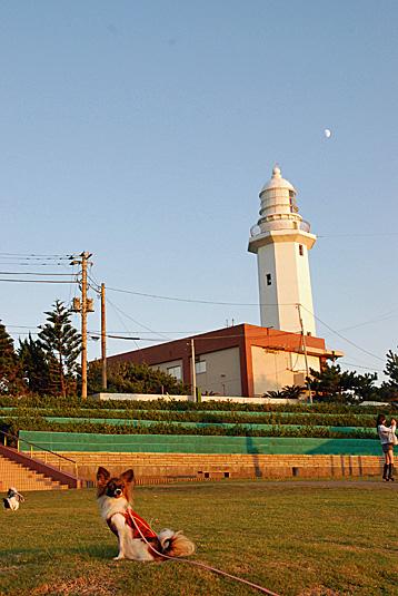 灯台と月と犬