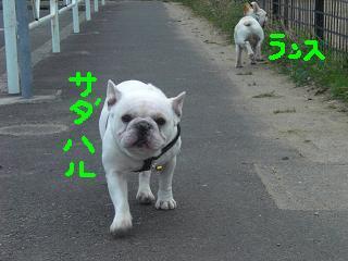 CIMG6541_convert_20090404224213.jpg