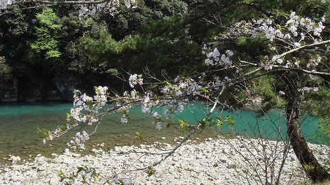桜01hichinosusakura03