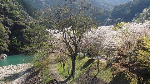 桜01hichinosusakura04
