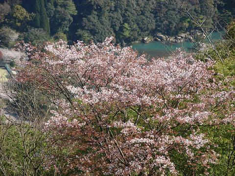 桜05hotelkitagochobo01