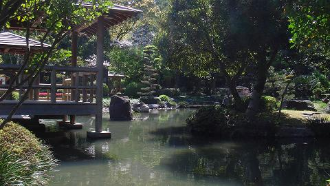 桜06chikoen01