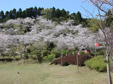 桜06chikoen04