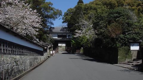 桜08ootemonsakura01
