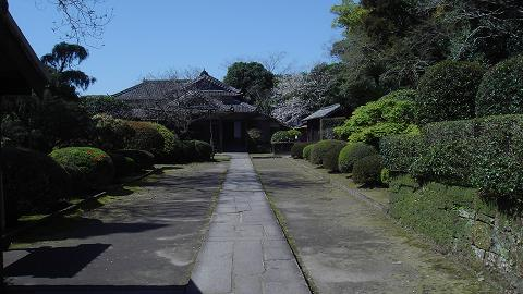 桜08ootemonsakura02