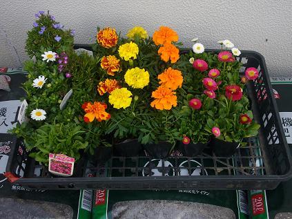 会社春の花