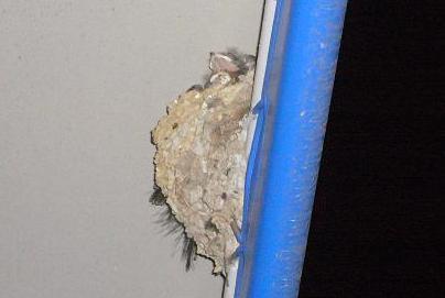 石津駅ツバメの巣