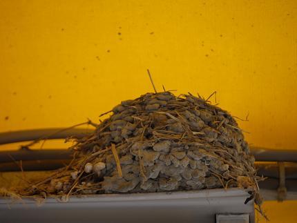 ツバメの巣0712