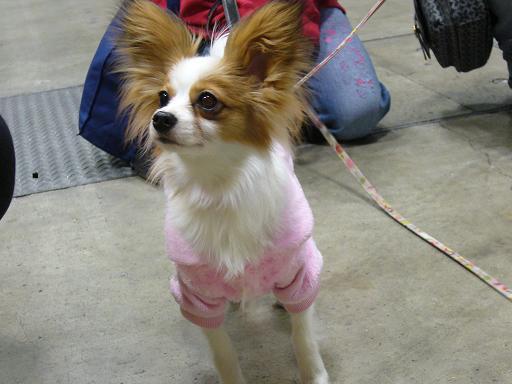 ピンクのワンピがお似合いのアリスちゃん