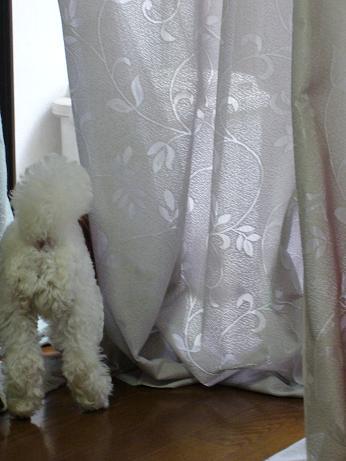 窓の外に何を見る?