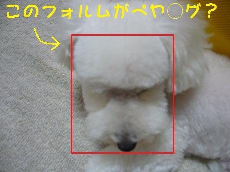 四角いお顔?!
