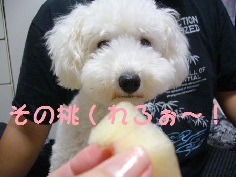 その桃くれろぉ~!!