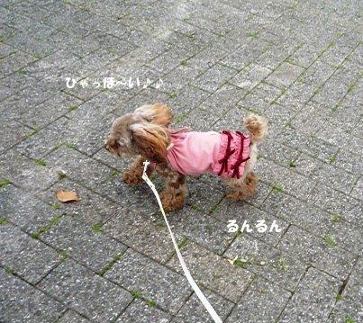 お散歩だ~い