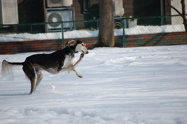 ウルトラ犬