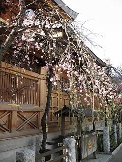 湯島天神の梅まつり2