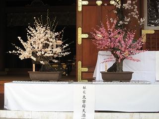 湯島天神の梅まつり4