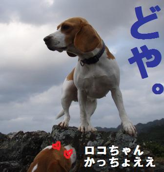 miso4.jpg