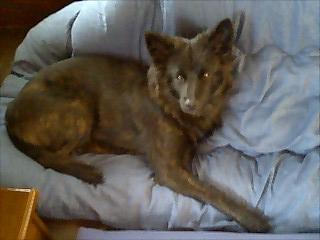 ファラオの犬
