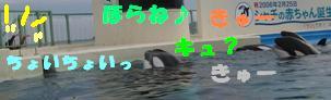 20060515230836.jpg