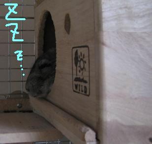 20060530211044.jpg