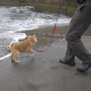 きゃっ!波だ!!