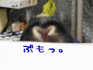20070214184247.jpg