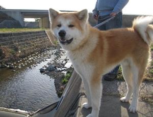田舎が似合う犬