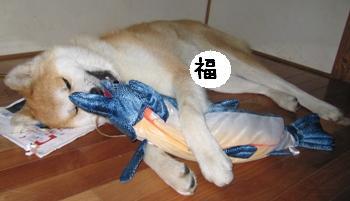 新巻鮭、まるかじりッ!