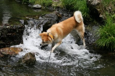 お水遊びは楽しい