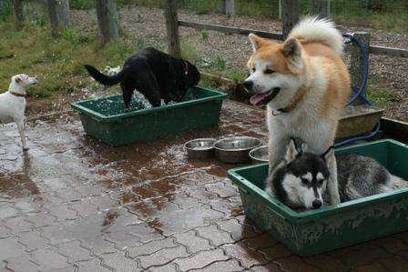 水遊びはいいねぇ