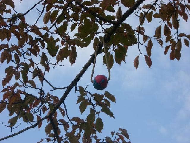木になるボール