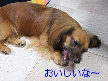2006_0814oisi.jpg