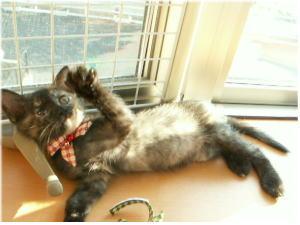 サビ猫のサーシャちゃん