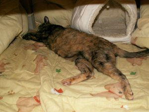 フクさん~通院後の寝んね中